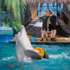 Дельфинарии, океанариумы Мытищ