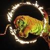 Цирки в Мытищах