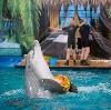 Дельфинарии, океанариумы в Мытищах